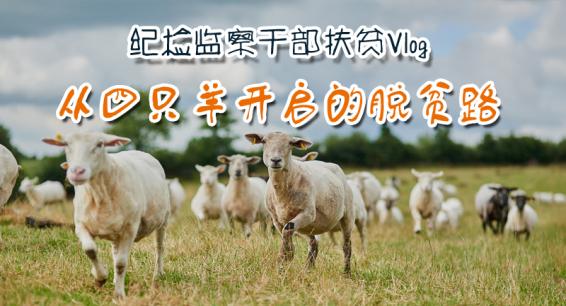 纪检监察干部扶贫Vlog |从四只羊开启的脱贫路